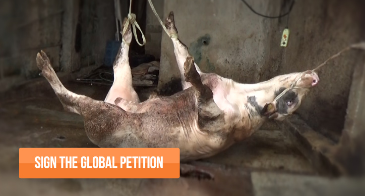 SIGN THE GLOBAL PETITION