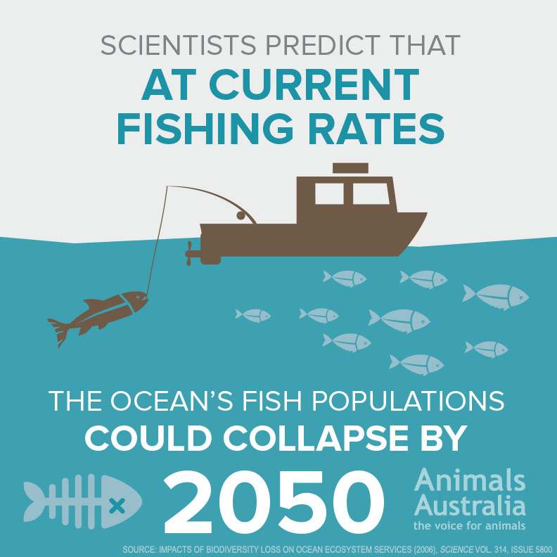 Scientists predict our oceans could collapse by 2050