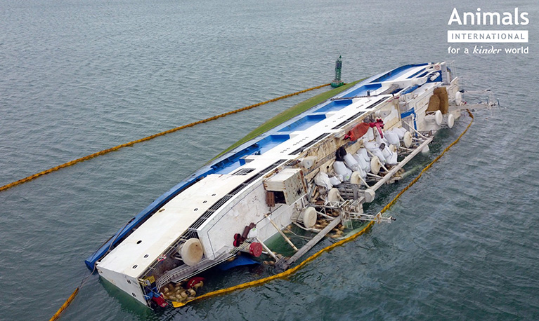 Capsized live export ship - causing unimaginable pain and suffering.