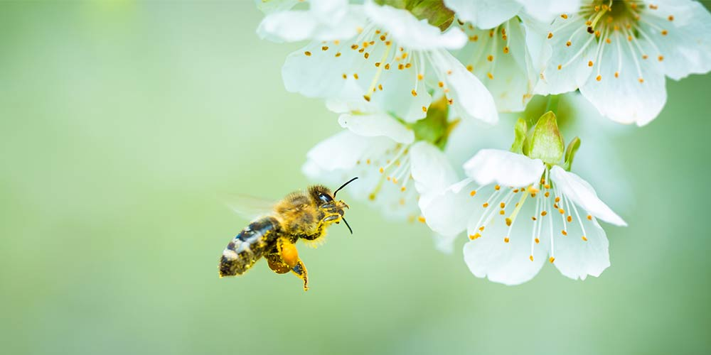 WWF estimates that more than 75% of the leading global food crops benefit from pollination. Some of these crops are key sources of human nutrition.