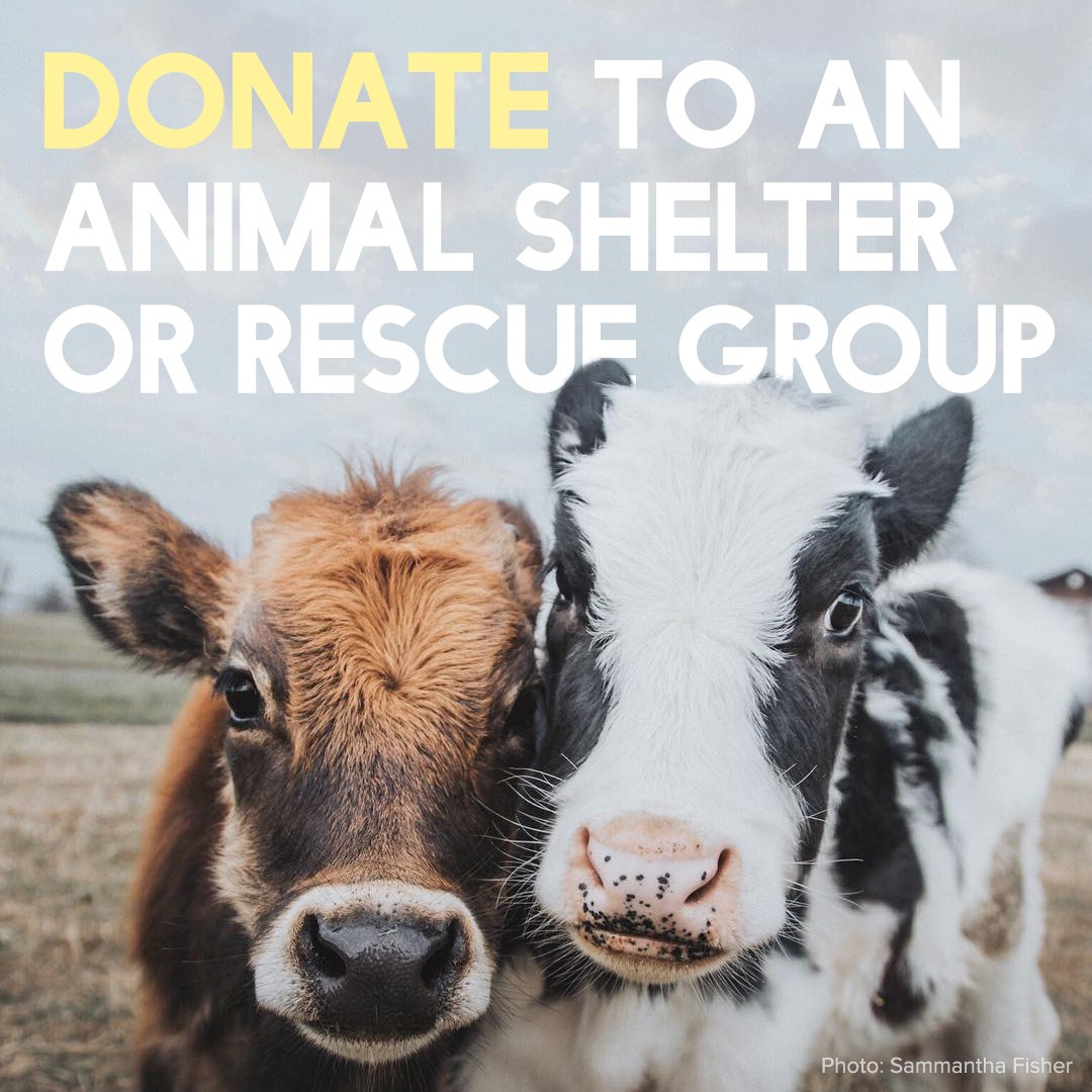 donate-to-shelter-or-rescue-group.jpg