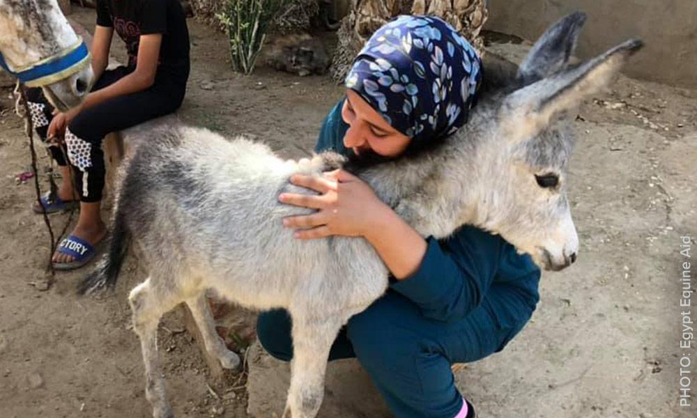 Egypt Equine Aid.