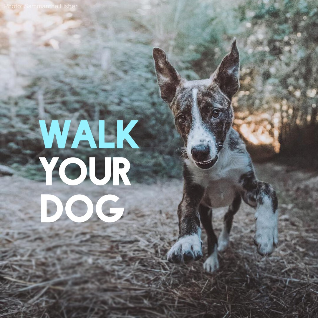 walk-your-dog.jpg