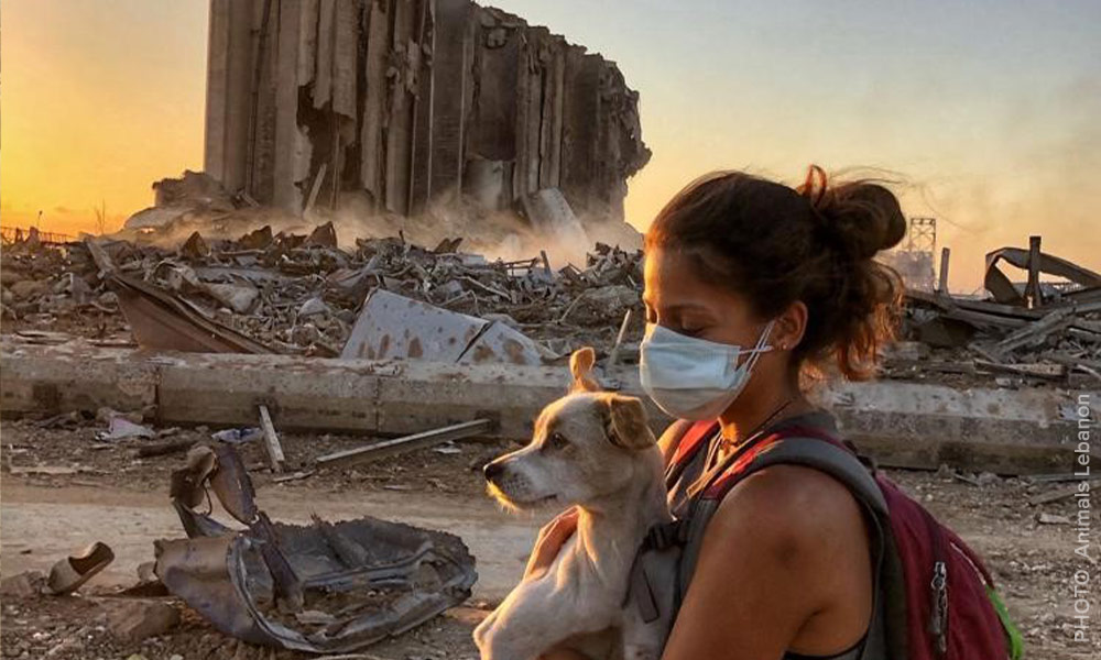 Animals Lebanon - woman wearing a mask and backpack carries a small terrier dog past burned-out rubble