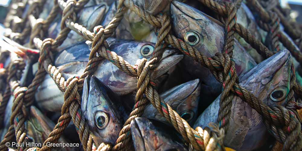 Fish struggle to breath in fishing net