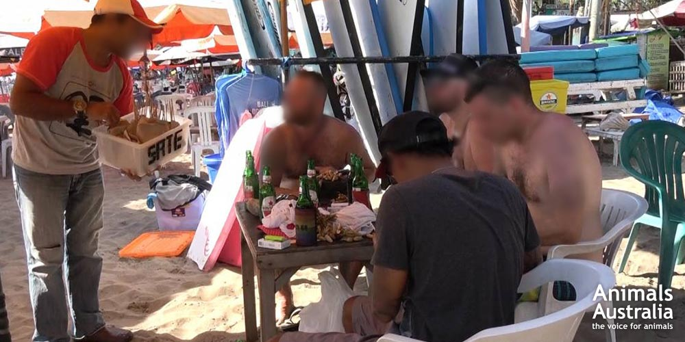 Bali dog meat investigation - Australian tourists unknowingly purchase dog meat satay sticks from a beach vendor.