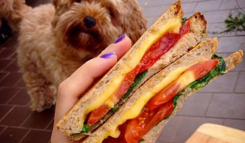Dairy-free? Dog approved? Dig in!