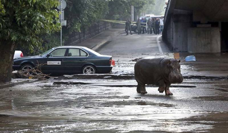 The flood in Tbilisi saw zoo enclosures destroyed and animals loosed onto the streets.