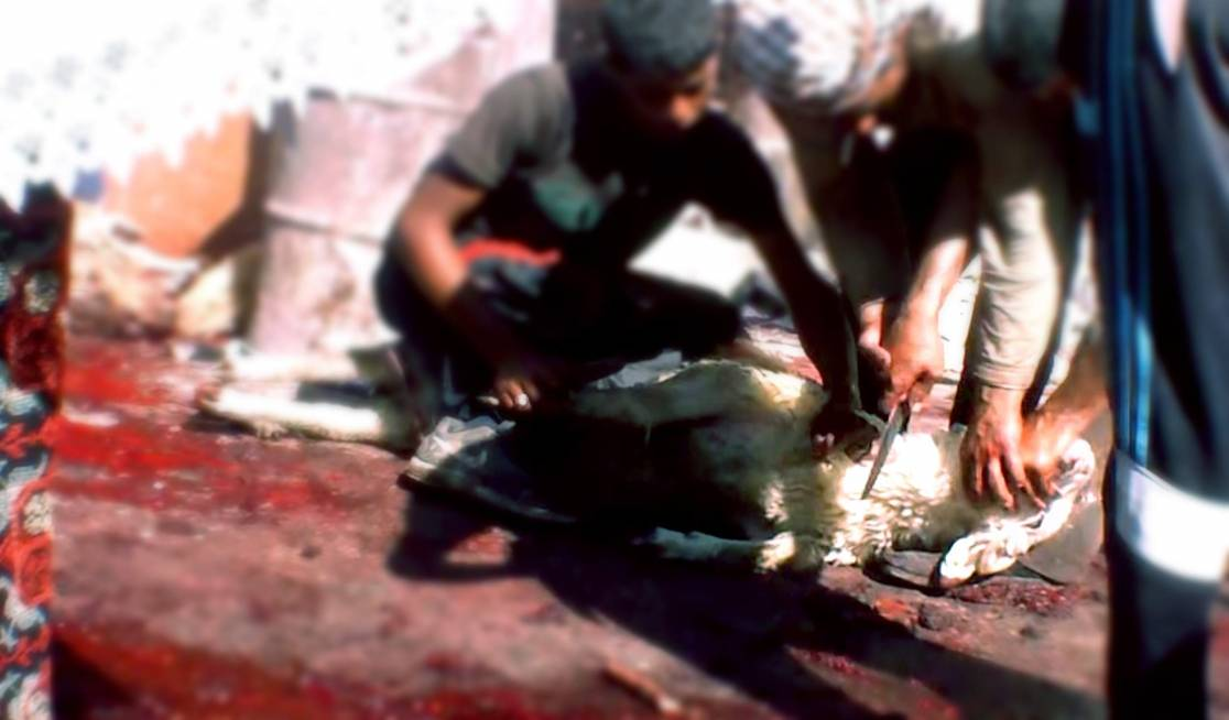 In Jordan, Romanian sheep were being brutally killed in the street.