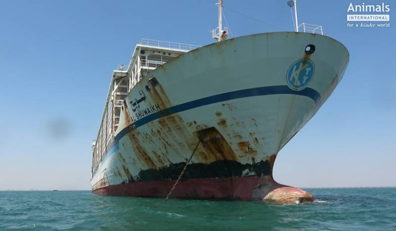 Ship of Death: The 'Al Shuwaikh' that transported 66,000 gentle Romanian sheep to their doom.